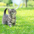 Cute little cat on the grass looking up...
