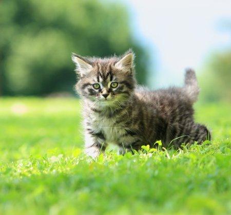 Photo pour Mignon petit chat jouant sur l'herbe - image libre de droit