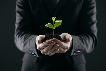 Photo for Businessman with seedling in his hands - Royalty Free Image