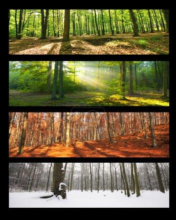 Photo pour Collage forestier, quatre saisons - image libre de droit