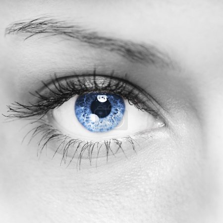 Photo for Blue woman eye macro shot - Royalty Free Image