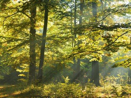 Photo pour Beautidul rayons de soleil dans la forêt verte - image libre de droit