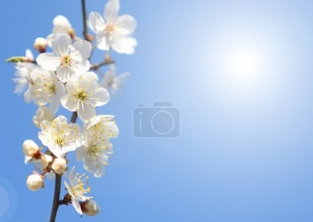 Photo for White spring flowers over clear bkue sky with sun - Royalty Free Image
