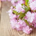 Sakura - Japanese pink cherry blossoms on wooden b...