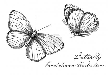 Illustration for Vintage Butterfly Set - Royalty Free Image