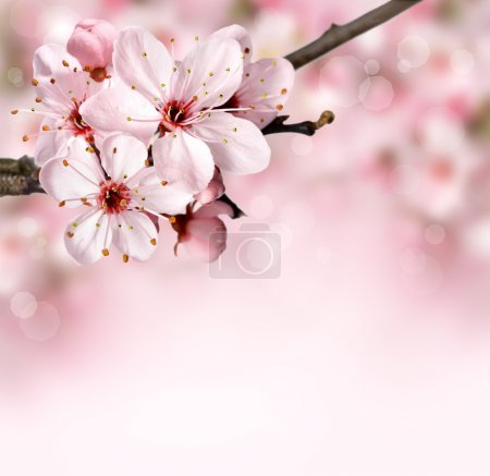 Photo for Spring blossom background with pink flowers - Royalty Free Image