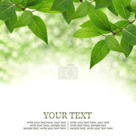 Photo for Green leaves border background with bokeh - Royalty Free Image