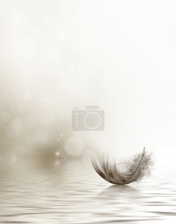 Condolence or sympathy design with a feather drift...