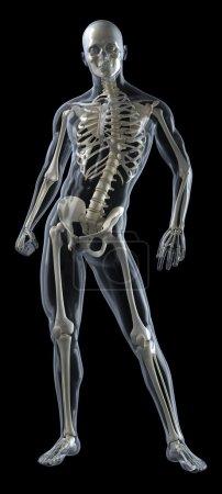 Full Human Body Medical Scan