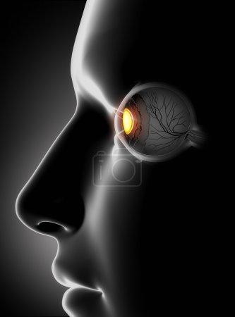 Photo pour Visage masculin avec des os de l'oeil humain - image libre de droit
