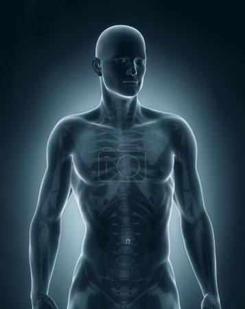 Man anatomy anterior view