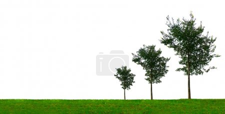 Growing Trees Graph Business Concept
