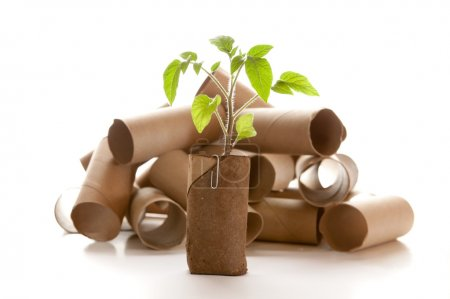 Photo for Empty toilet paper roll recycled as a seedling planter - Royalty Free Image