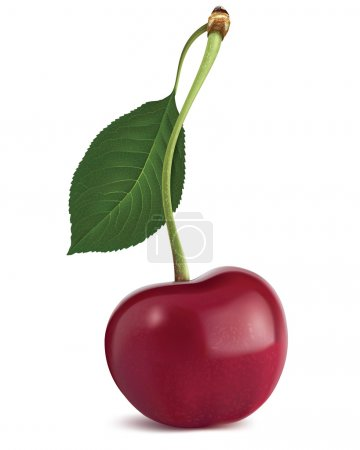 Illustration for Cherry with leaf. Vector illustration - Royalty Free Image