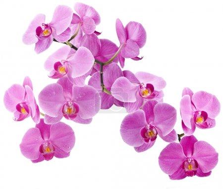 Photo pour Fleurs d'orchidées avec de l'eau descend, carte de voeux (avec exemple de texte) - image libre de droit