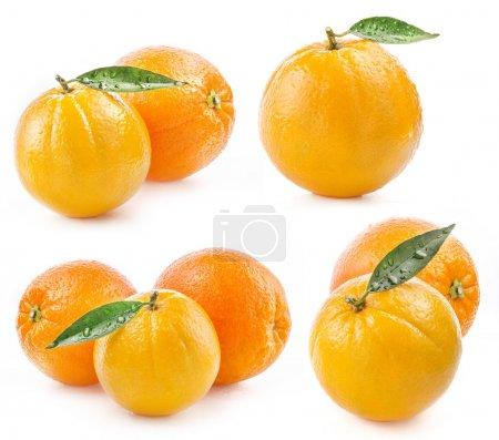 Photo pour Collection de fruits oranges mûres à l'eau et la feuille tombe isolé sur fond blanc - image libre de droit
