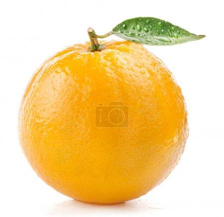 Photo pour Mûrs fruits orange à l'eau et la feuille tombe isolé sur fond blanc - image libre de droit