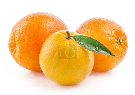 Photo pour Fruits oranges mûres à l'eau et la feuille tombe isolé sur fond blanc - image libre de droit