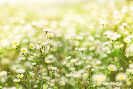 Photo pour Herbe verte et fleur aux rayons du soleil, Gros plan - image libre de droit