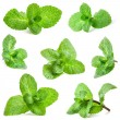 Fresh mint isolated on a white background...