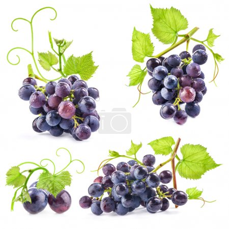 Ripe dark grapes with leaves
