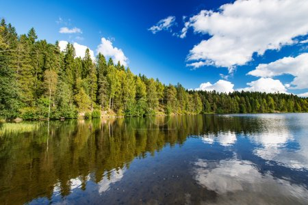 Wild forrest lake sky