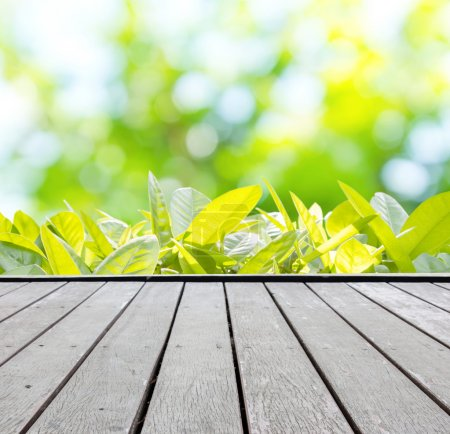 Photo for Summer Background - Royalty Free Image