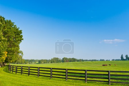Country Scenery. Summer landscape.