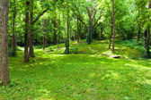 Beautiful green forest at sunny summer day.