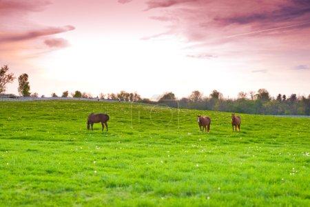 Chevaux sur les terres agricoles