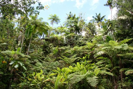 Photo pour Jungles tropicales - image libre de droit