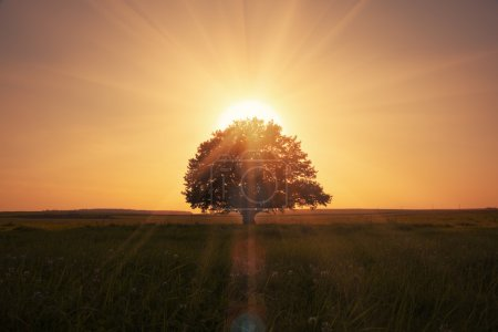 Photo for Magical sunrise with tree - Royalty Free Image