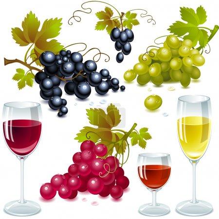 Illustration pour Différentes variétés de raisins avec des feuilles. verre à vin avec vin . - image libre de droit