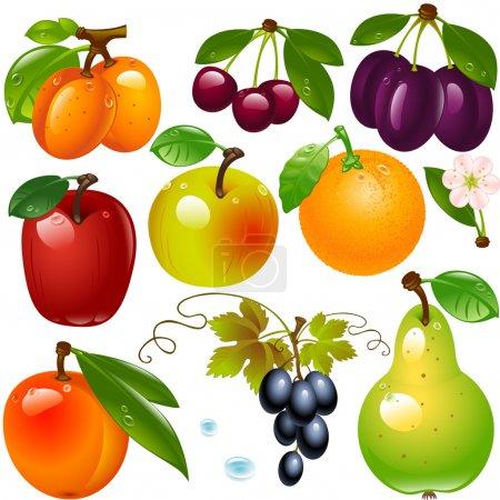 Illustration pour Ensemble de différents fruits isolés sur un fond blanc - image libre de droit