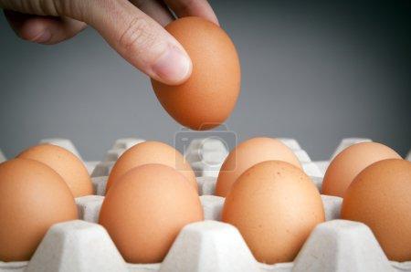 Photo pour Personne en choisissant les meilleurs œufs dans un carton d'oeufs - image libre de droit