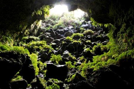 Photo pour Regarder en arrière vers une grotte d'ouverture avec des fougères vertes qui poussent sur les rochers - image libre de droit