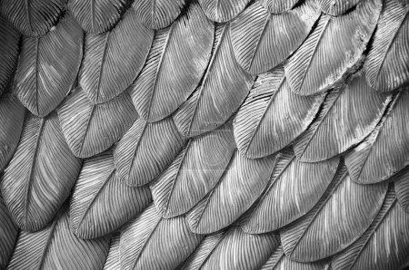 Photo pour Détail rapproché des plumes d'aigle d'une statue - image libre de droit