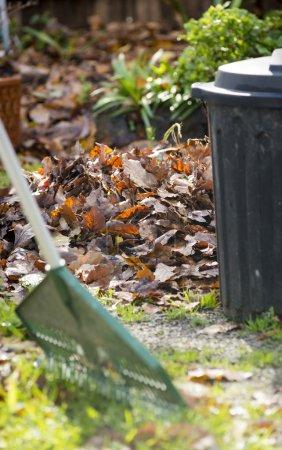 Photo pour Feuilles d'automne ont ouvert vers le haut dans la Cour avec un bac - image libre de droit