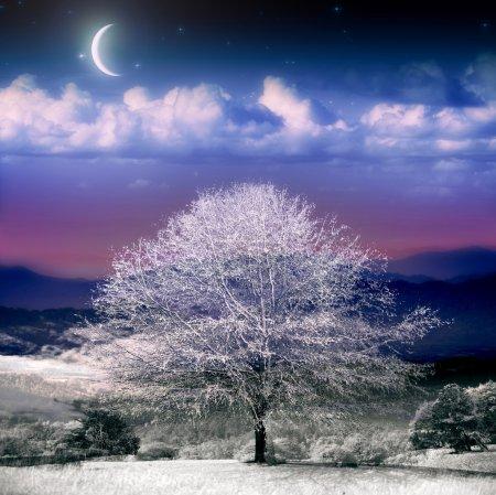 Photo for Fantasy Winter Scene - Royalty Free Image