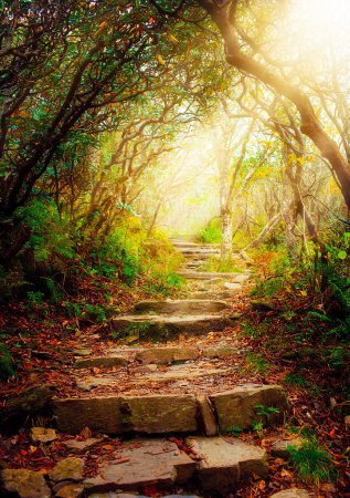 Photo for Morning sun rays shine on forest pathway - Royalty Free Image