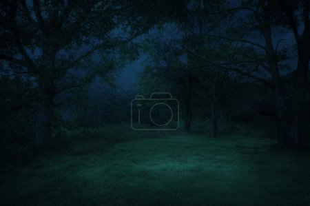 Photo for Forest in the night - Royalty Free Image