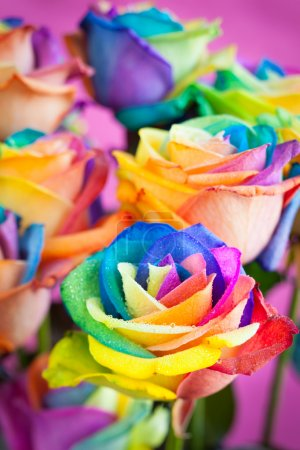 Photo pour Bouquet de roses multicolores (Rainbow rose ) - image libre de droit