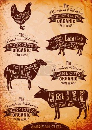vector diagram cut carcasses chicken, pig, cow, lamb