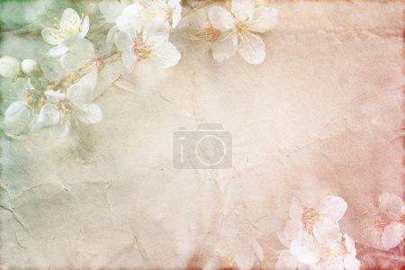 Photo pour Texture grunge doux printemps fleurs sur vieux papier avec des couleurs pastels - image libre de droit