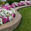 Peink and White petunias on the flower bed along w...