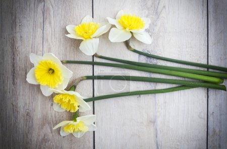 Photo for Daffodils - Royalty Free Image