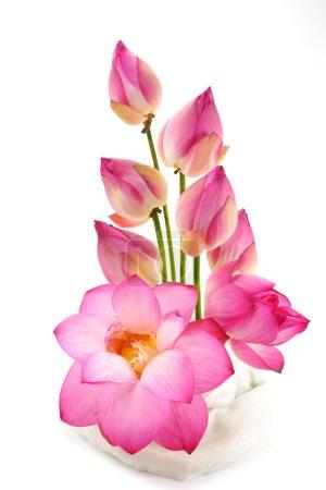Photo pour Isoler les arrangements floraux avec lotus sur fond blanc. - image libre de droit