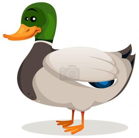 Illustration of a cartoon mallard duck with green ...