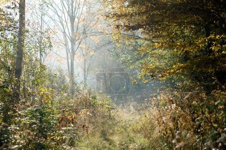 Photo pour Chemin à travers une forêt brumeuse à l'automne - image libre de droit