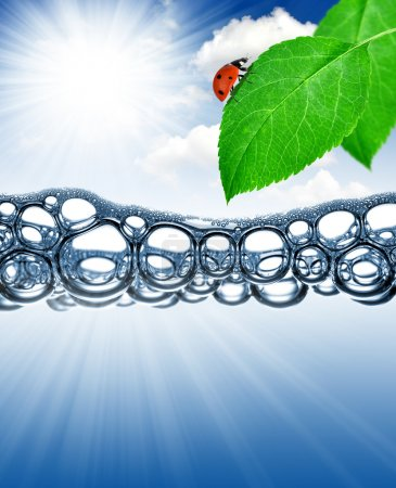 Photo for Green leaf with ladybug above the water level - Royalty Free Image